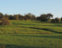 Nasza łąka